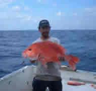 bottom_reel_grouper