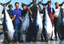 tuna_dock